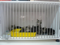 Medium  A cage