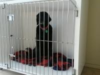 Double C cage 2