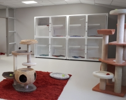 Cat Low Stress 4 cage unit   w lockable portholes in cattery